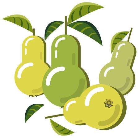 Pears Ilustração