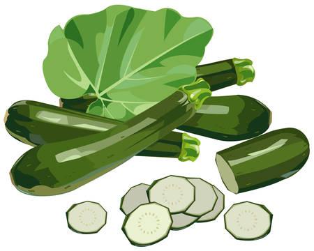 Zucchini Illustration