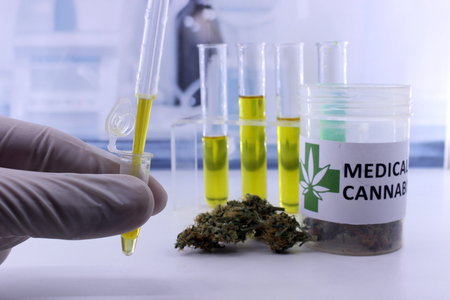 Testing marijuana buds for the extraction of medicinal oil 版權商用圖片