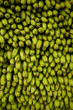Fresh Green Banana piled at fruit market in southern Ecuador Stok Fotoğraf