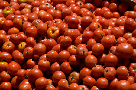 Red field tomatoes, brusied, blemished at farmers market