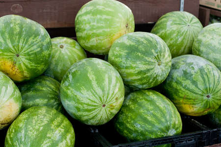 Fresh Watermelons on display for sale at farmers market Stock Photo