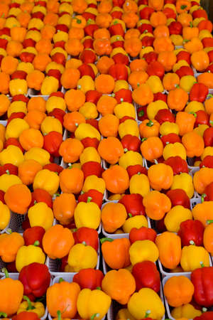 Orange, yellow and red peppers displayed for sale at farmers market