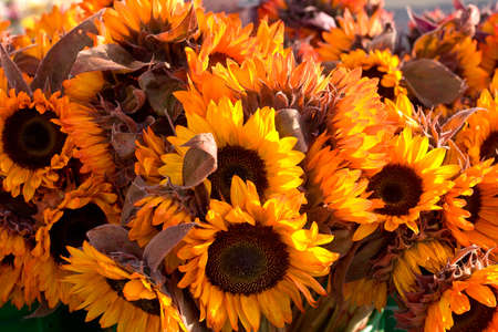 Sunflowers for sale and display at famers market, warm colors
