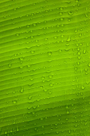 Closeup of green leaf with many water drops vertical Stock Photo - 17132237