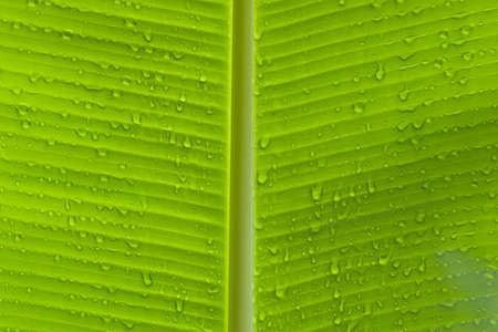 Closeup of green leaf with many water drops horizantal Stock Photo