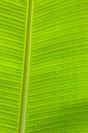 Closeup of green leaf with many water drops vertical Stock Photo - 17132221