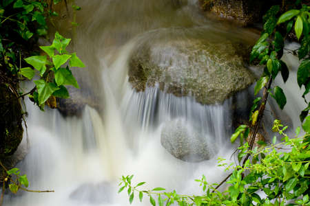 foiliage: Closeup of water rushing over rock with green leaves and foiliage