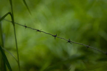 trepassing: closeup of a barbed wire fence with green out of focus in the background