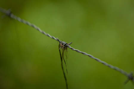 closeup of a barbed wire fence with green out of focus in the background Stock Photo - 17132234