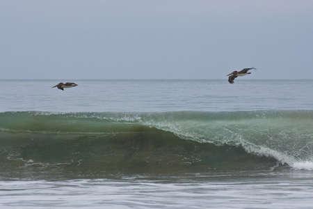 Pár barna pelikánok repül át a hullámok az óceán, a Csendes-óceán, Ecuador Stock fotó