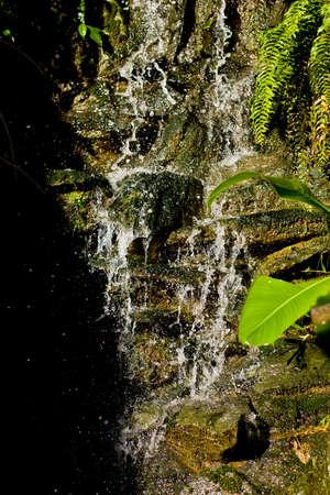 Falling clean fresh water in bright Ecuador Sun with green plants