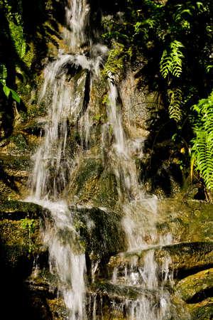 Falling tiszta, friss vízzel világos Ecuador Sun, zöld növények