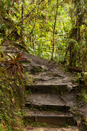 Jungle, forest path, mud steps with wood Stock Photo