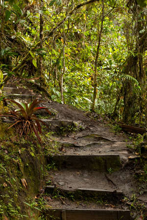 Jungle, forest path, mud steps with wood Stock fotó