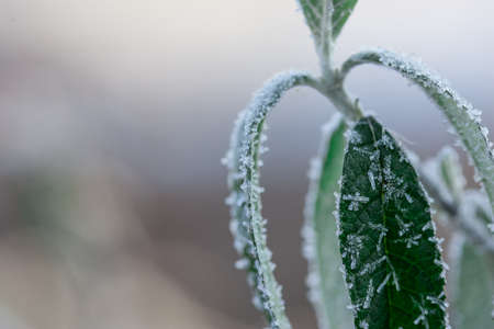 lite: Green leaves with back lite Ice Crystals against bright blurred background