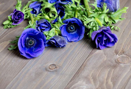 anemone flower: anemone flower on wood background Stock Photo