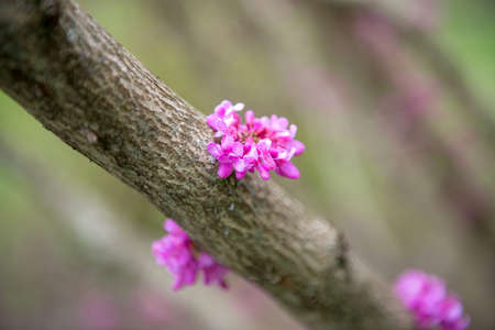 Trunk of a tree with a pink flower