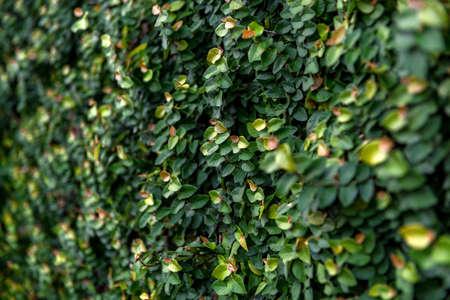 Floristic background. green leaves Imagens