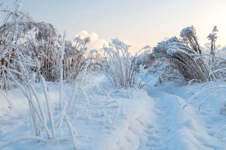 Winter landscape with snowy trees.