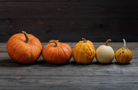 Pumpkins on dark wooden background. Autumn halloween harvesting thanksgiving concept with space for text. Pumpkin composition