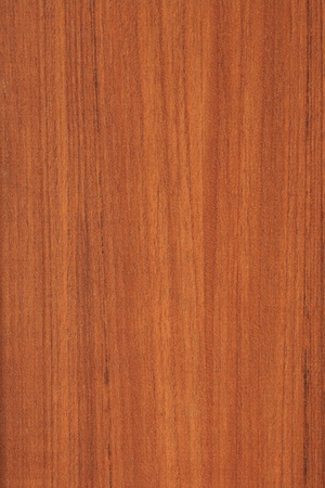 texture of wood Stock Photo - 8859781