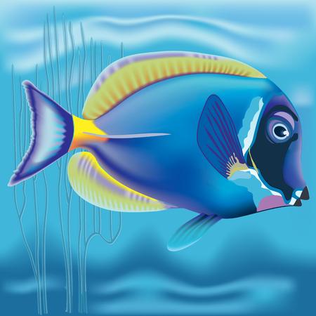 acanthurus: Exotic fish: Acanthurus
