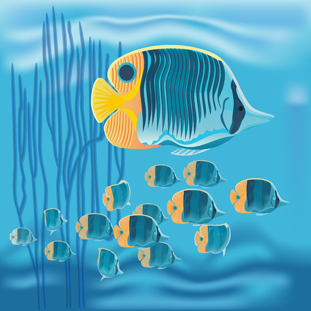 chelmon: Vector a colorful tropical copperband butterflyfish, Chelmon rostratus on blue background Illustration