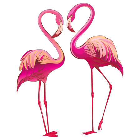 Two pink flamingo looking at each other, isolated on white illustration. Romantic couple. Beautiful pink flamingos in love. Exotic birds.