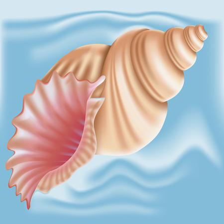 Seashell. Vector. Vettoriali