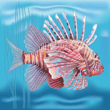 Vector Pterois radiata in an aquarium on a blue background