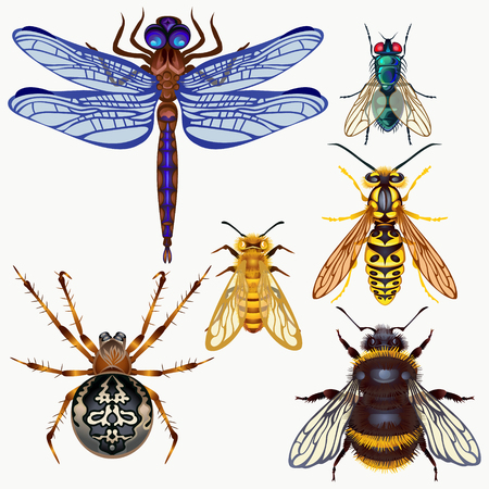 wasp: Vector insects fly, bumble bee, wasp, spider, dragonfly