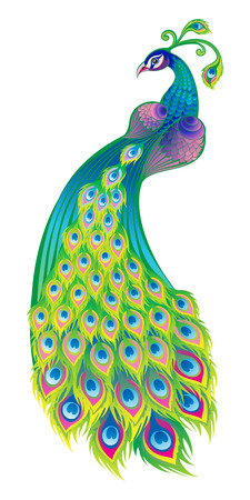 Vector illustration of a peacock on a white background Vettoriali