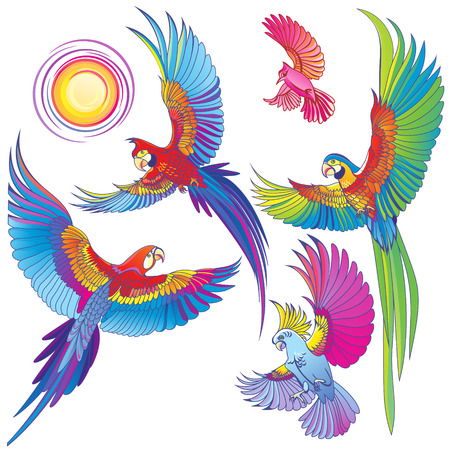 Vector Parrots on white background