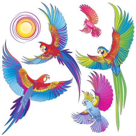 Vector pappagalli su sfondo bianco Archivio Fotografico - 66905433