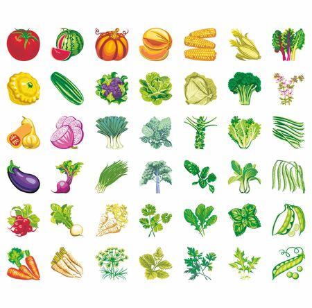 Set di icone vettoriali di verdure: radicchio, carote, cavoli, mais, lattuga, piselli, fagioli, rape ... Archivio Fotografico - 66905624