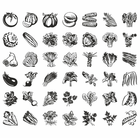 set of vector icons of vegetables: radish, carrots, cabbage, corn, lettuce, peas, beans, turnips ...