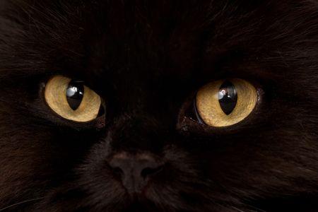 Macro close-up of a black cat yellow eyes Stock Photo