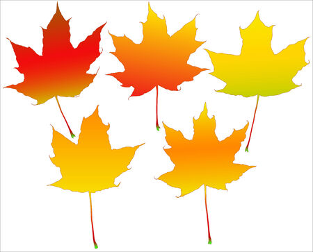 cold pack: Five autumn leafs set isolated over white background