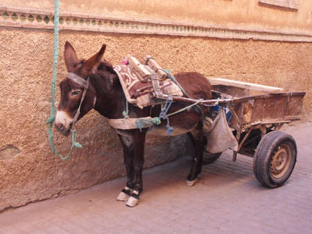 marocco: Donkey Marrakesh Medina Marocco