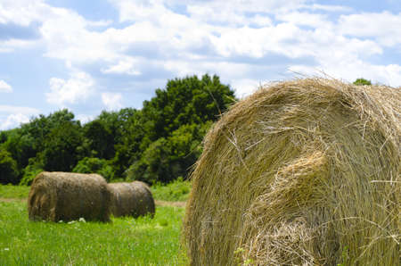 close-up of a hay bale out in the field with blue sky and green trees in the background photo