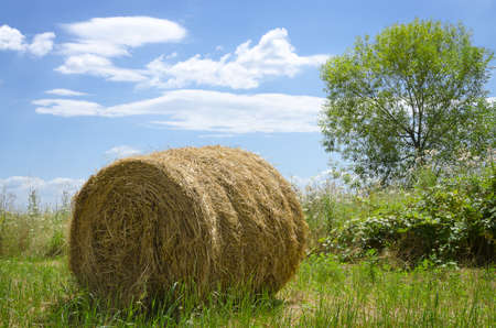 hay bale out in the field with blue sky and green tree in the background photo