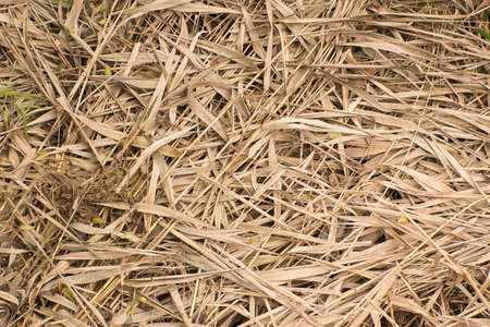 flattened: dried up leaves flattened on the ground Stock Photo