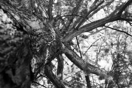 black and white close-up photo of a tree from ground up Reklamní fotografie