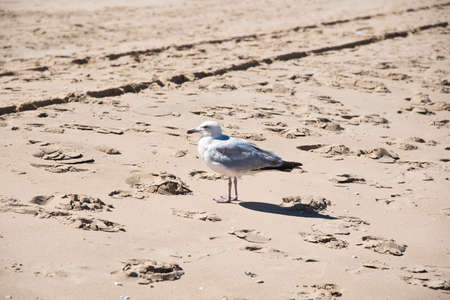 lonely seagull standing on a rough sand