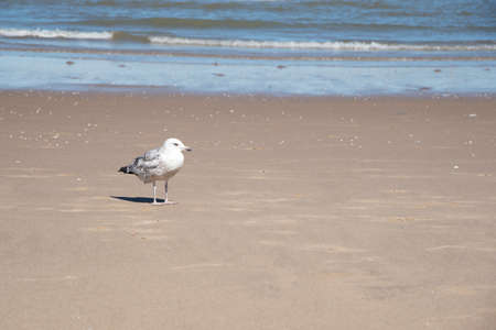 lonely seagull standing on a rough sandy beach Reklamní fotografie