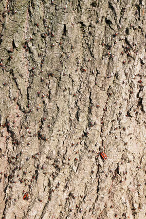 close up of a tree bark infested with small bugs Reklamní fotografie