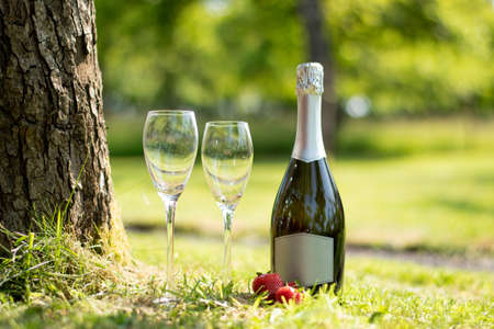 A bottle of Prosecco and strawberries in a beautiful green summer garden.