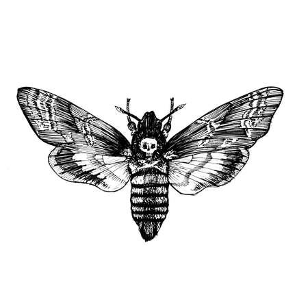 Butterfly Acherontia atropos , dead head, adams head. Black and white graphics handmade.