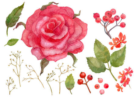 Set of floral elements rose, rose hip, leaves, gypsophila, berry, flowers foliage Watercolor illustration